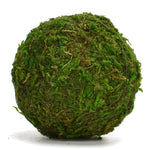 Moss Ball (Preserved)