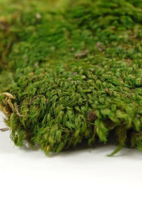 Preserved Mood Moss 8oz box