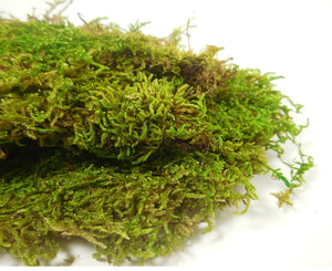 Preserved Sheet Moss 8oz box