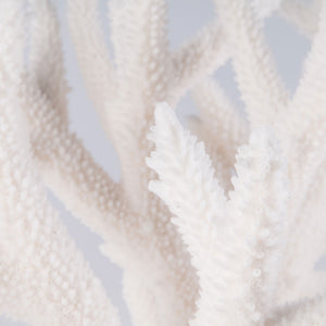 staghorn coral buy staghorn coral decorating with staghorn coral