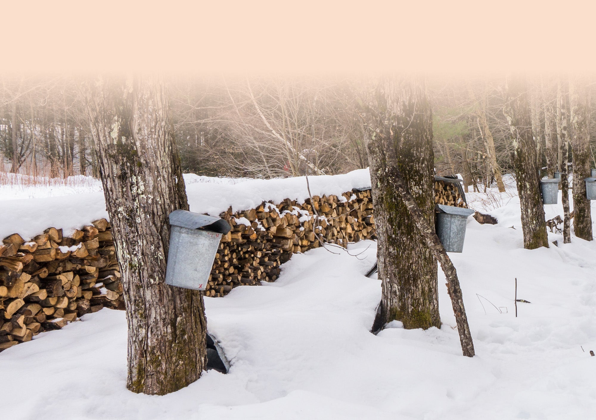 stacked wood on snowy ground