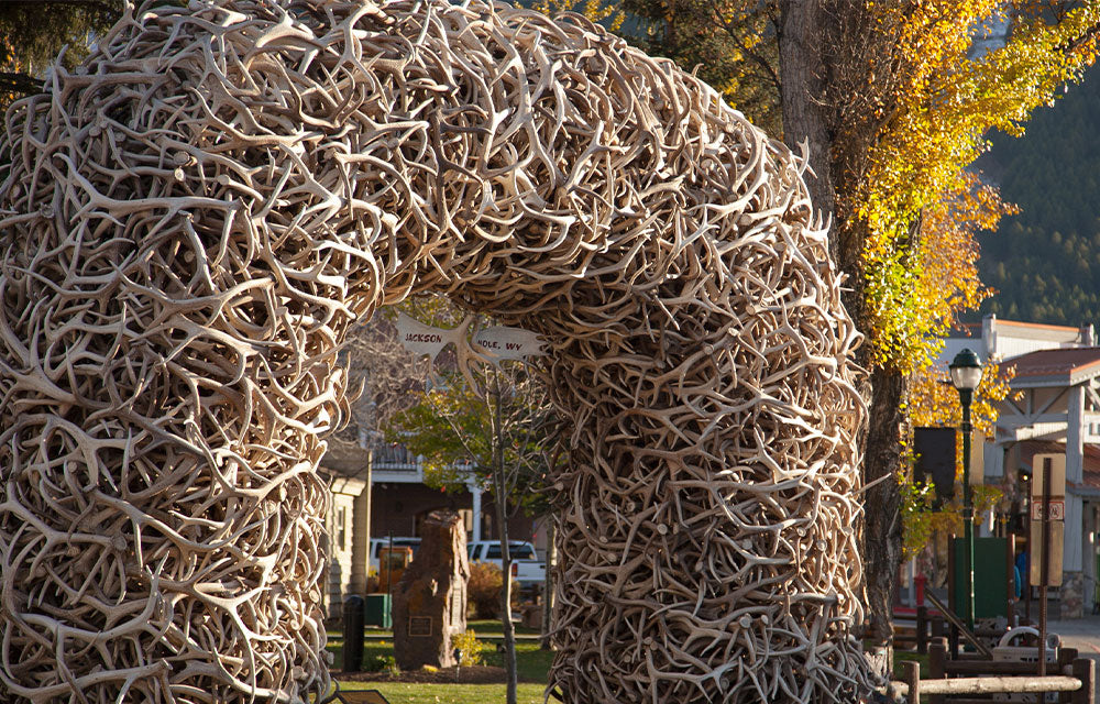 arch made with antlers