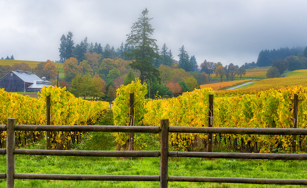 colorful vineyard with fall trees