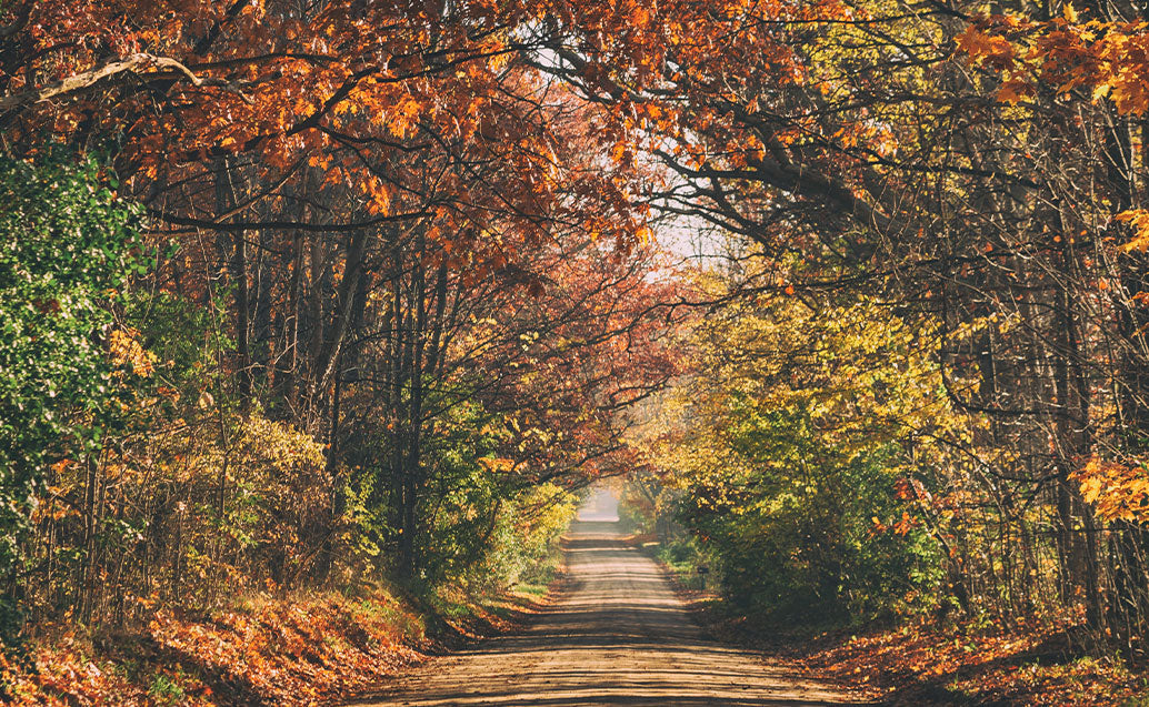 Fall season view of dirt road surrounded by orange tree life