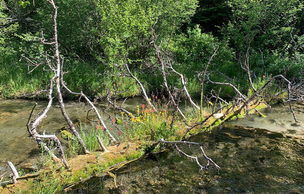 :fallen tree in river with green moss