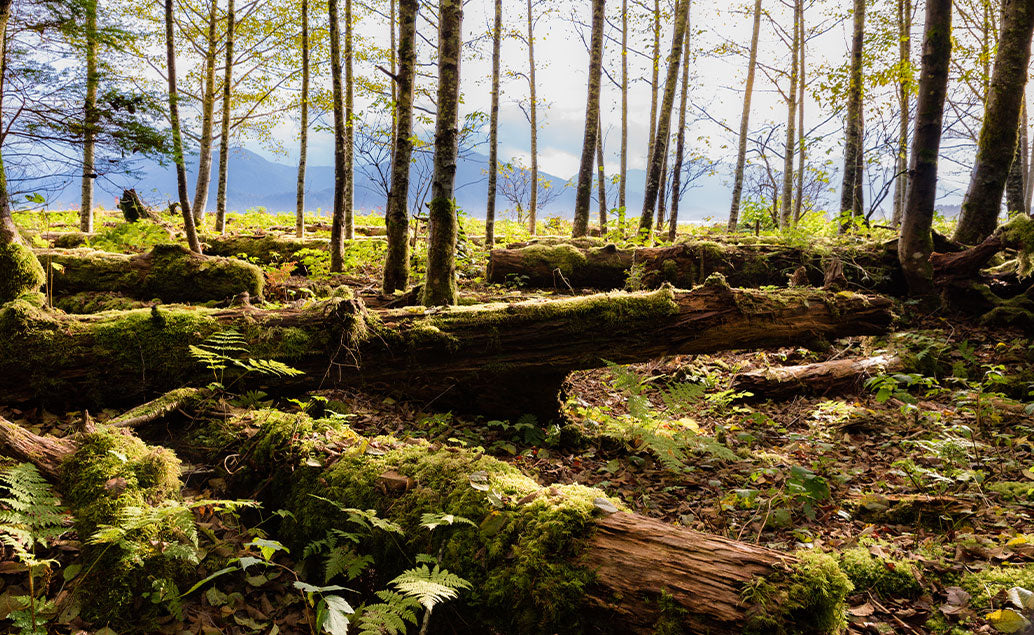 fallen trees with moss growing