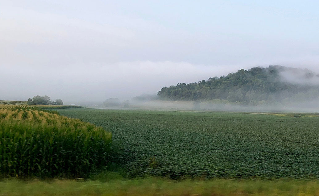 field with fog