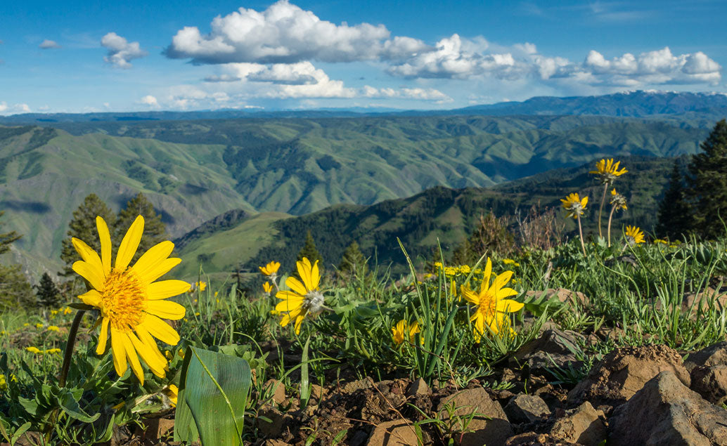 flowers in front of view of green moutain range