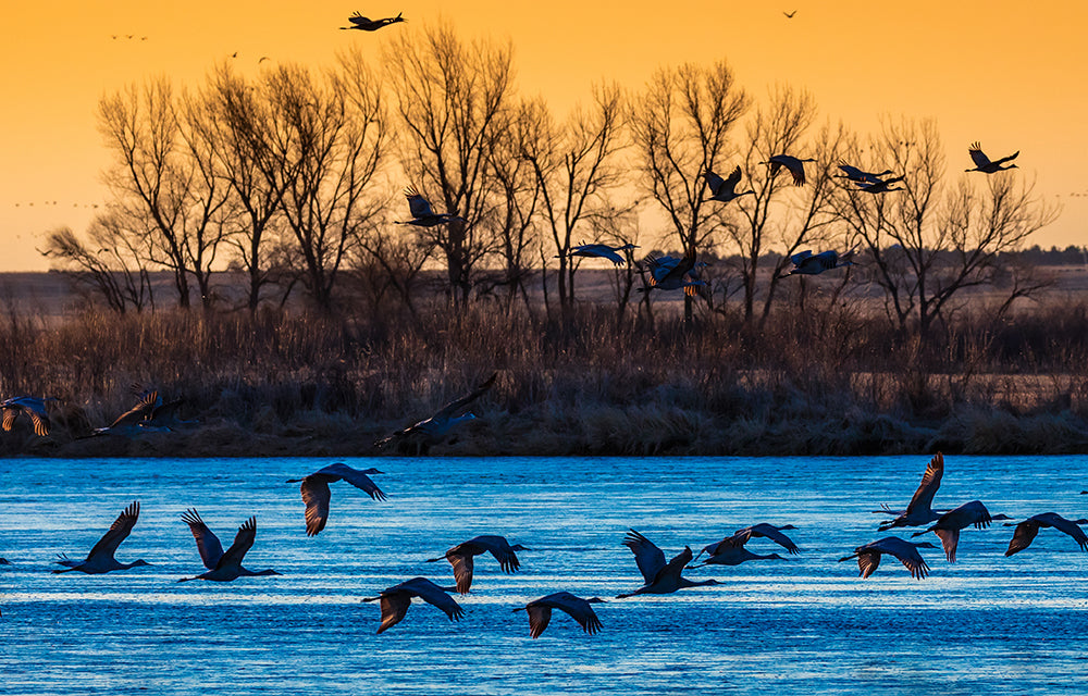 geese flying over lake