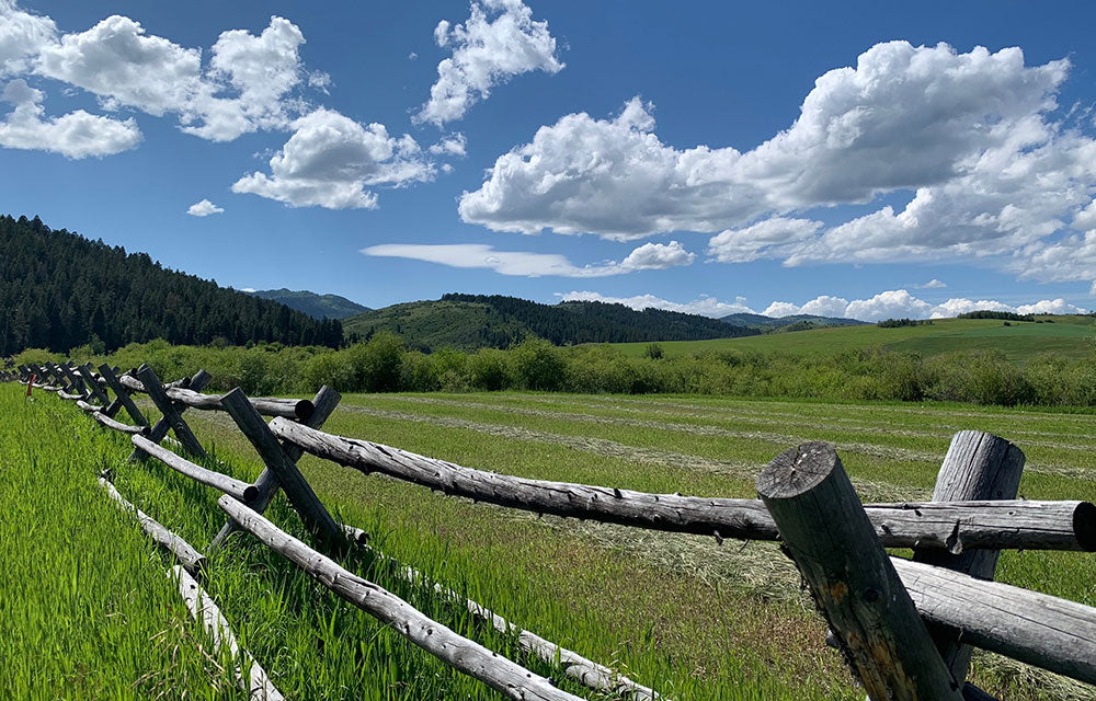 green fields with wooden log fence