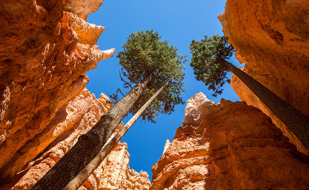 Looking up to trees between rock formations