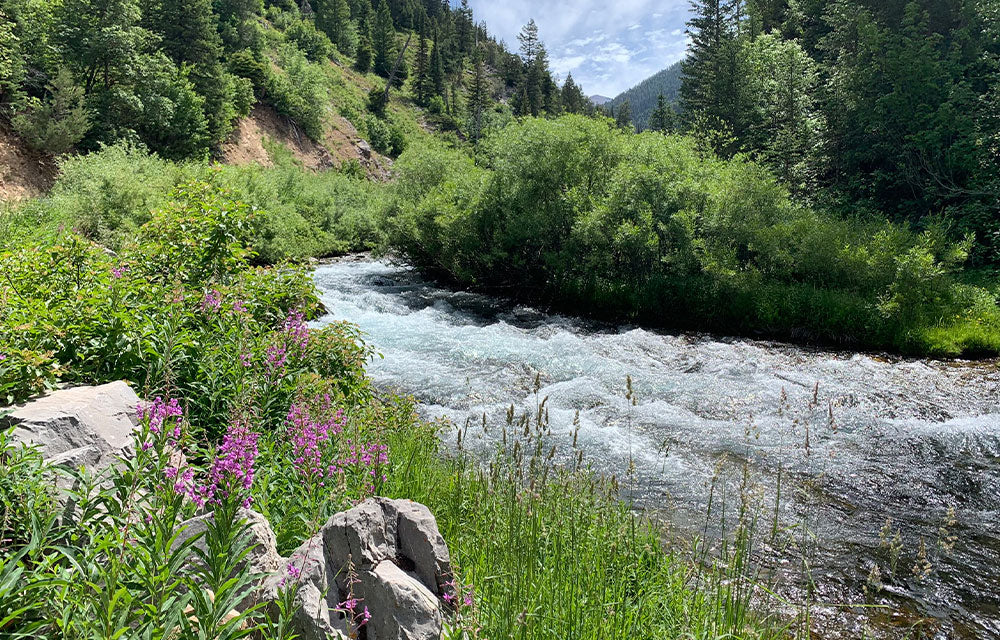 river between bushes of flowers