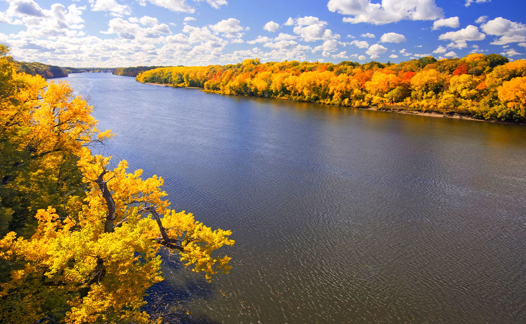 Fall season view of river and yellow tree life
