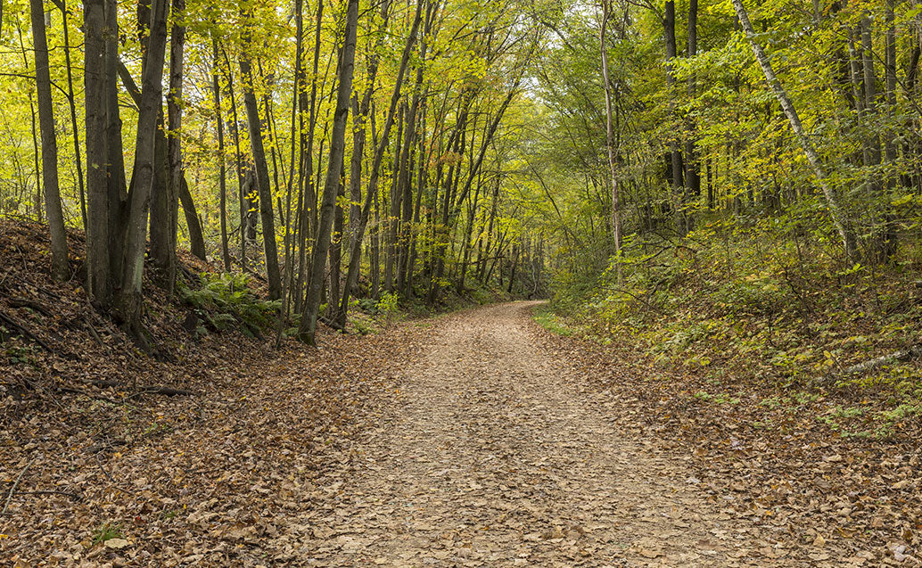 trail road on forest floor