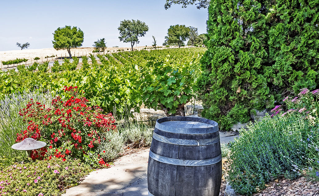 view of small vineyard