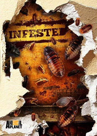 Infested DVD Movie