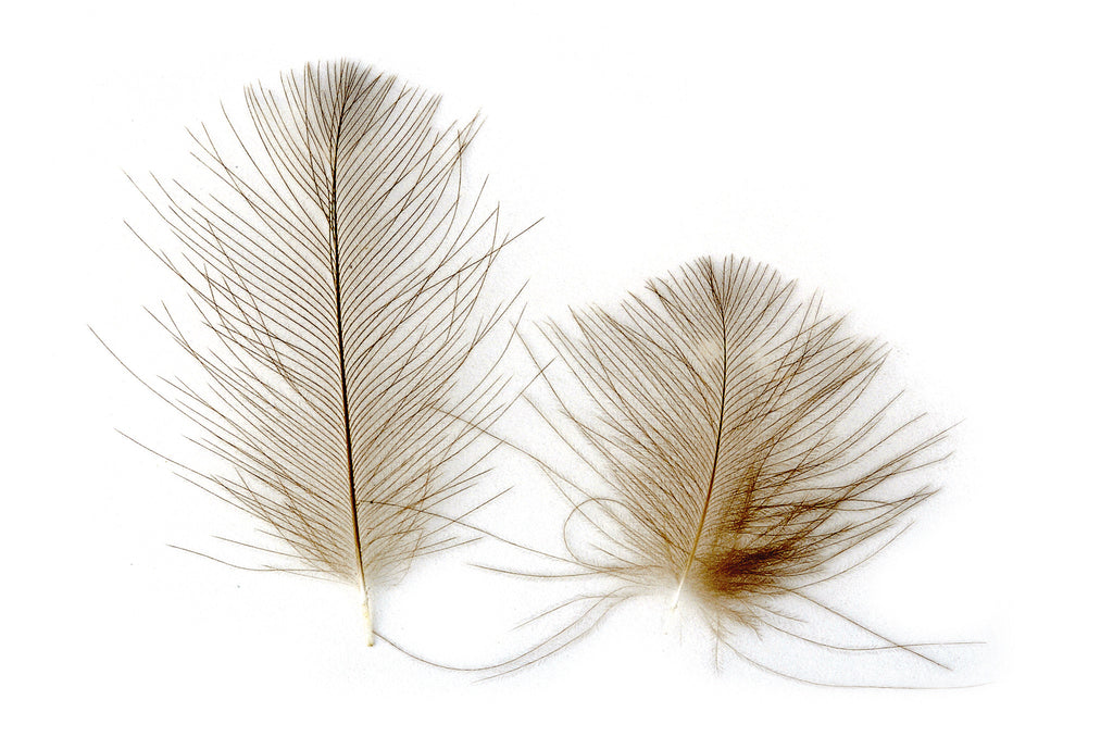 CDC Feathers SUPER SELECT (cul-de canard feathers)