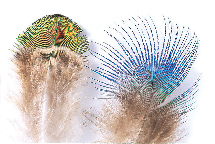 Peacock Blue Neck Feathers