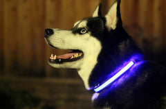 Halo Mini LED Safety Pet Collar Blue