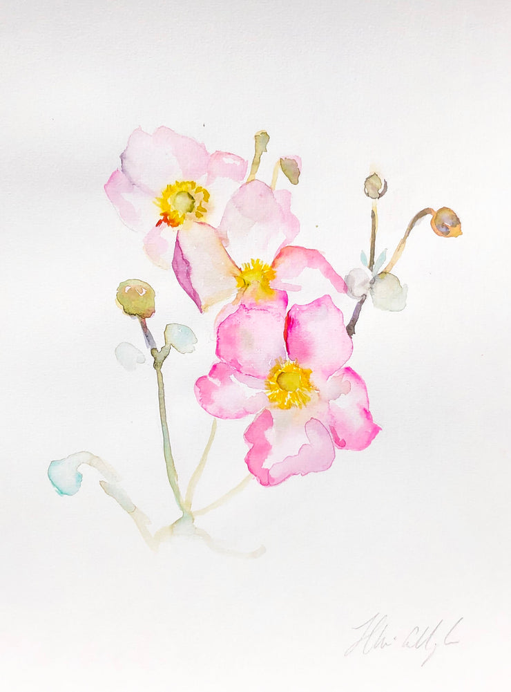 Japanese Anemones - watercolour on paper