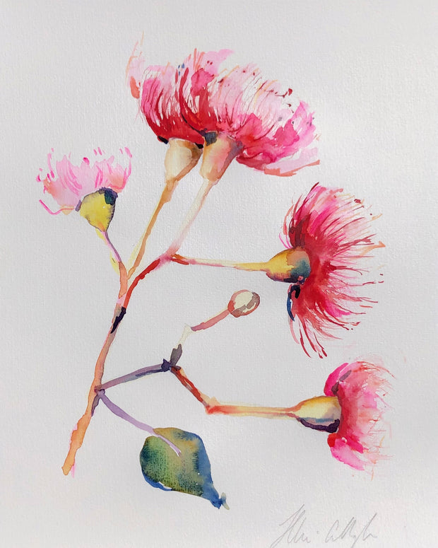 Gum Blossom original watercolour