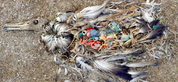 Plastic is Slowly Killing Us - 5 Ways You Can Help!