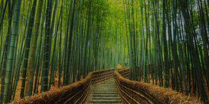 Bamboo Pathway to a Greener Future