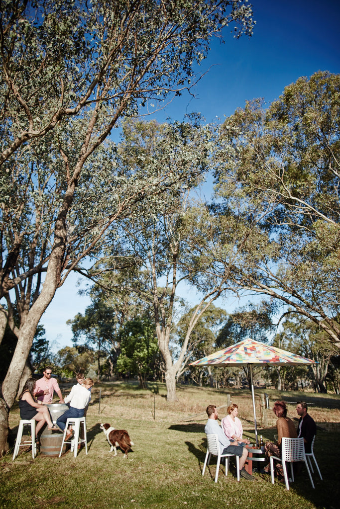 Vineyard Picnics among the gums at Scion