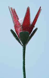 Beaded king protea