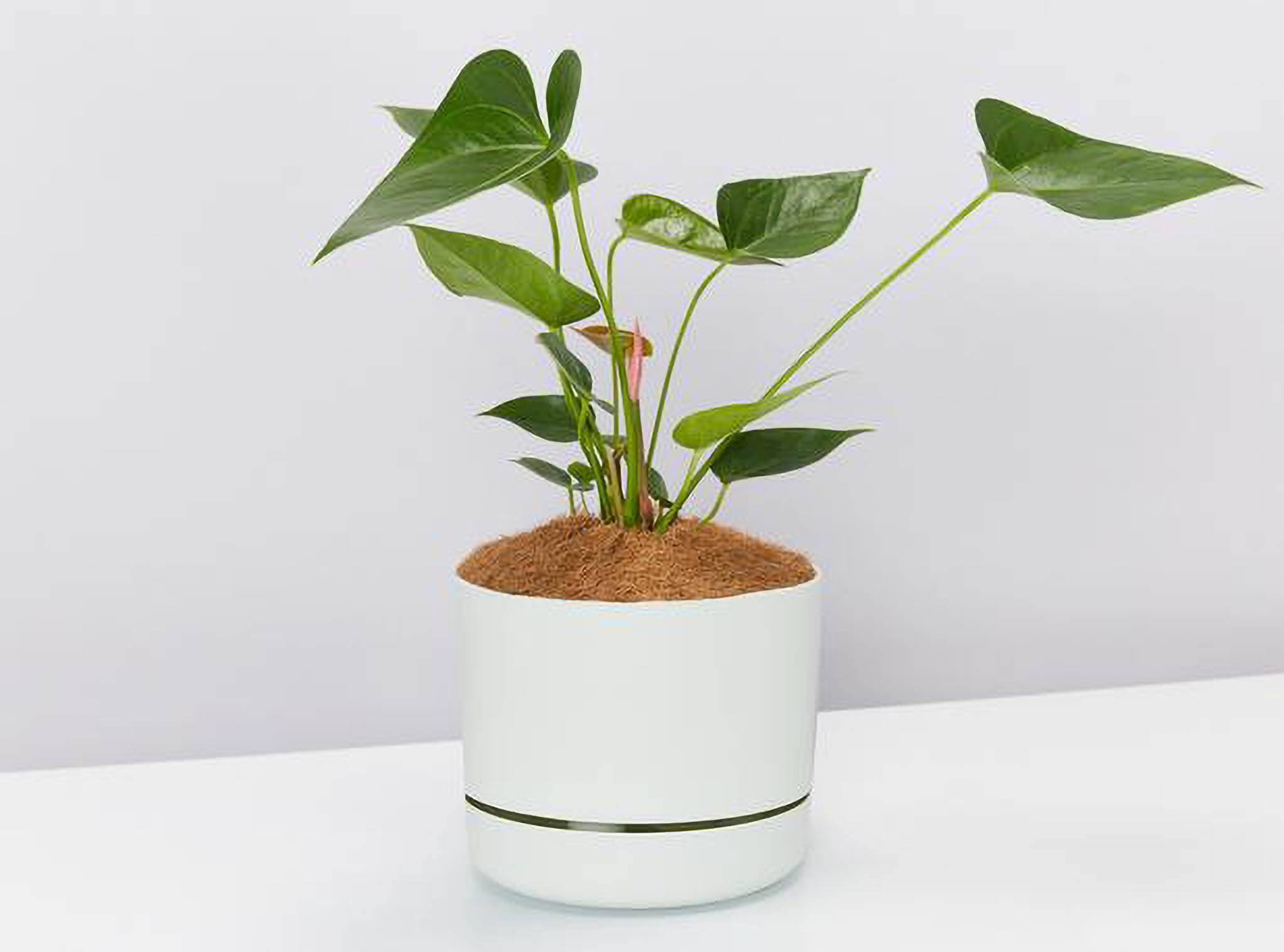 Plants in a Box | Indoor Plant | Eco Christmas