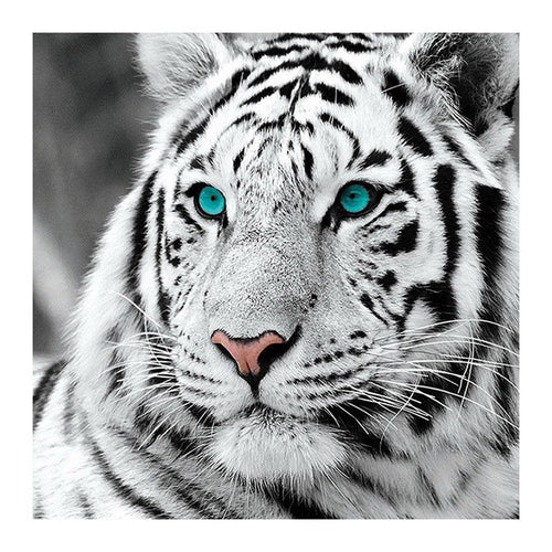 Tiger Head - Full Round Diamond - 30x30cm