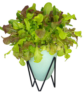 House of Aster Lettuce Self Watering Planter Indoor Herb Garden Kit Greens Romaine Hydroponic System Blue/Green