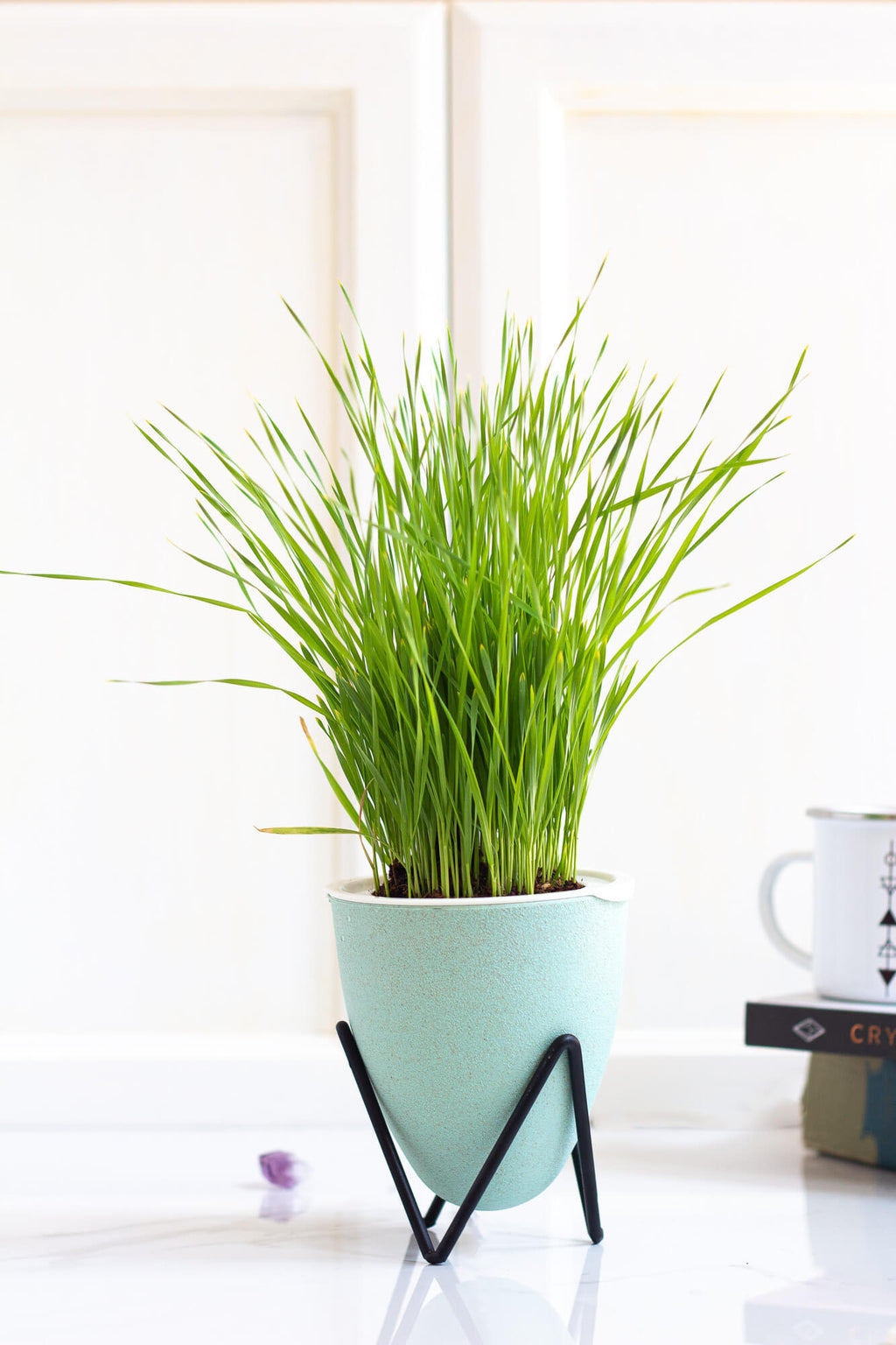 Wheatgrass Self-Watering Indoor Soilless Garden in Green/Blue - House of Aster