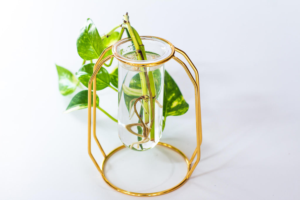 Set of 2 Gold Glass Vase Propagation Stations for Indoor Plants - House of Aster