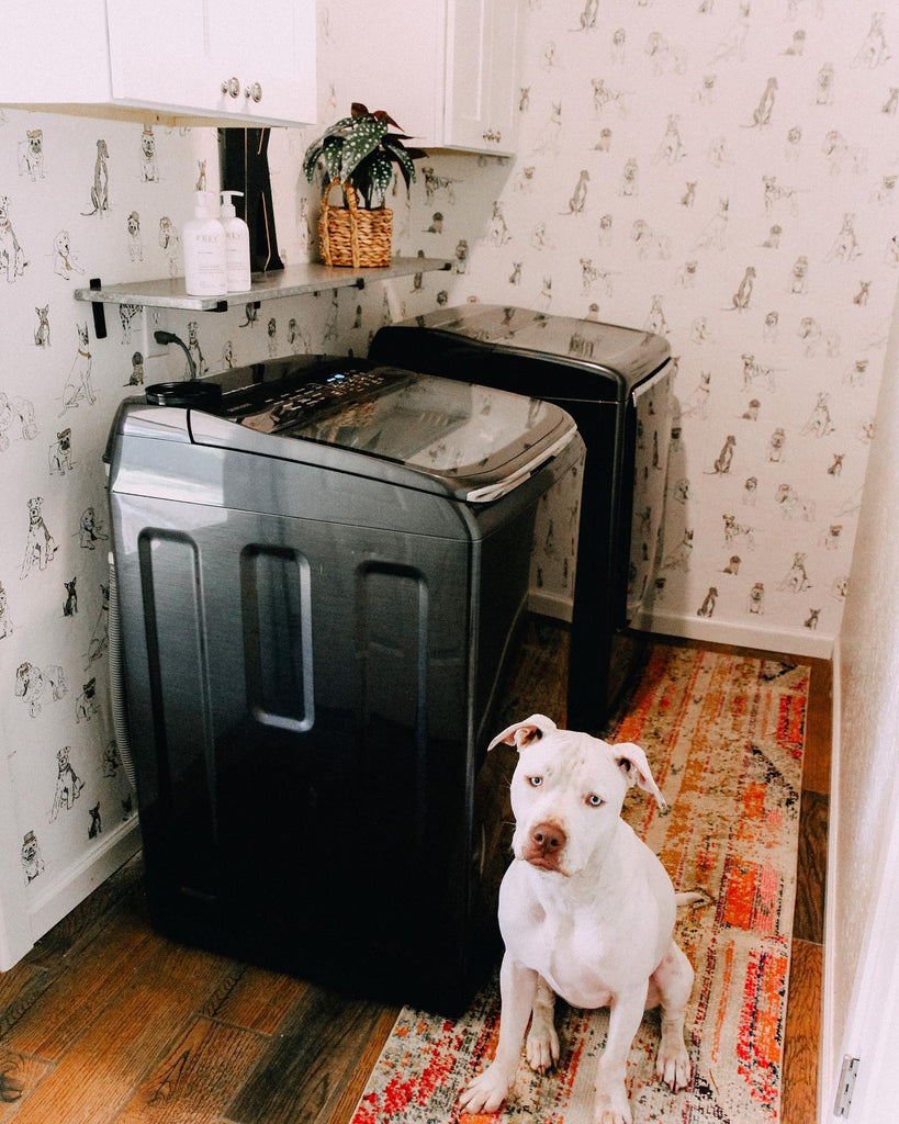 wallpaper dog laundry room