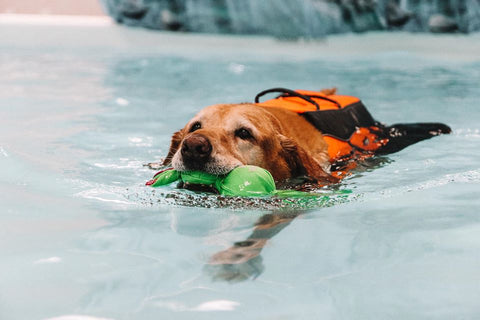 dog therapy swimming
