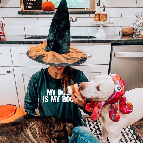 witch dog halloween costumes dog treat