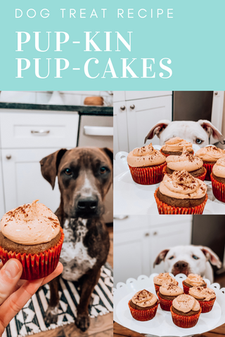 Pumpkin Pupcake Recipe