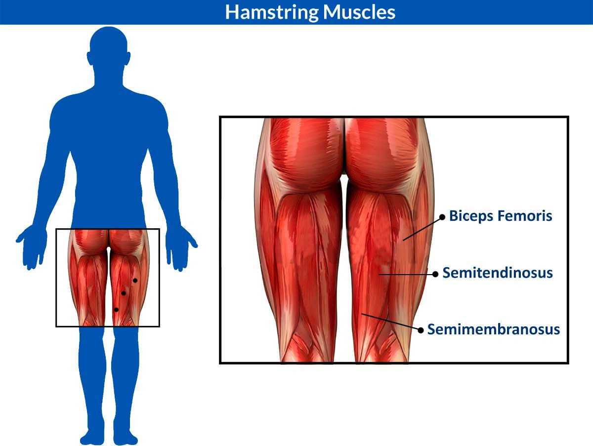 How To Identify Treat And Prevent Hamstring Muscle Injuries Supacore