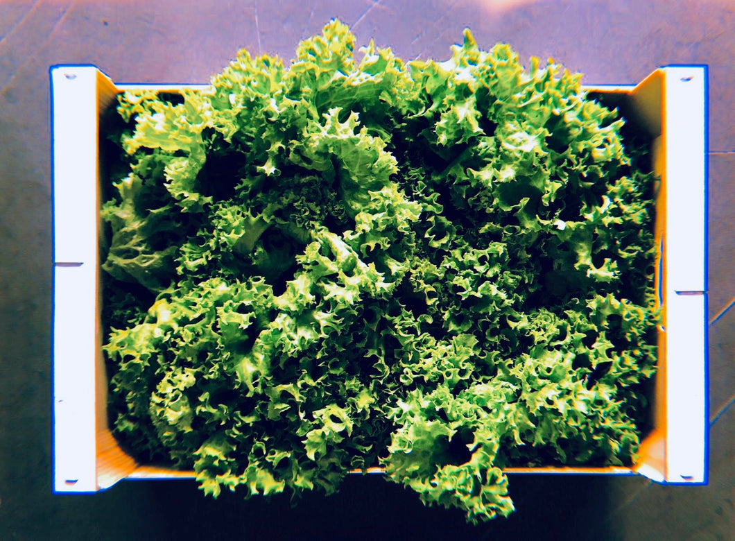 Farm box insalatara • 1 cassetta (1.5kg)