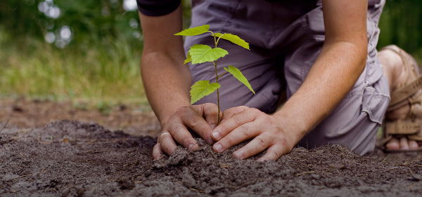 Tree being planted for one pound