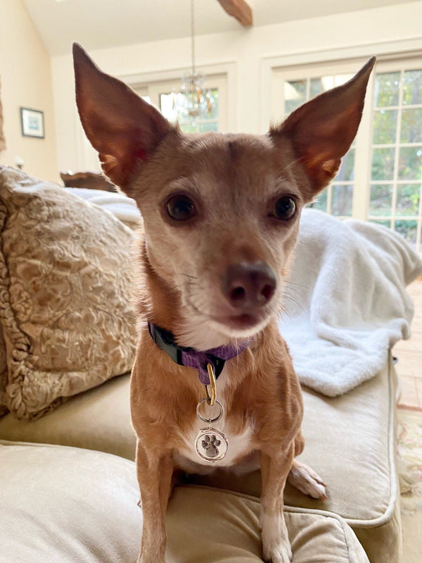Catherine Angiel's Rescue Dog Wearing the Paw Pendant