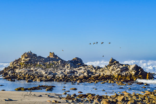 Pelican Flight School at Asilomar