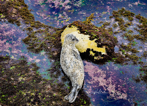 Black and White Harbor Seal