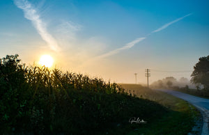 Sunrise Over an Iowa Cornfield