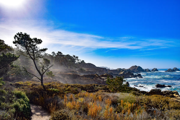 Misty Path at the Big Sur Coast