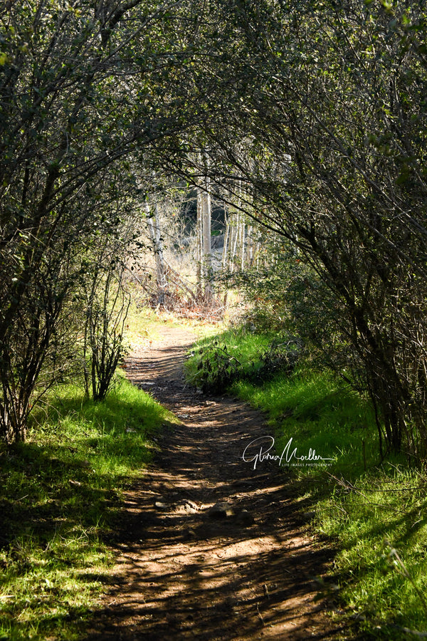 Into the Willows at Mission Trails
