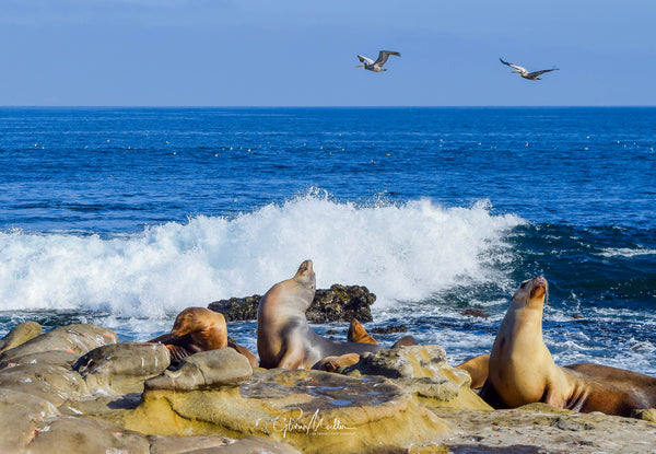 Sea, Sky, Sea Lions and Pelicans
