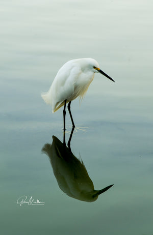 Ethereal Fishing Egret