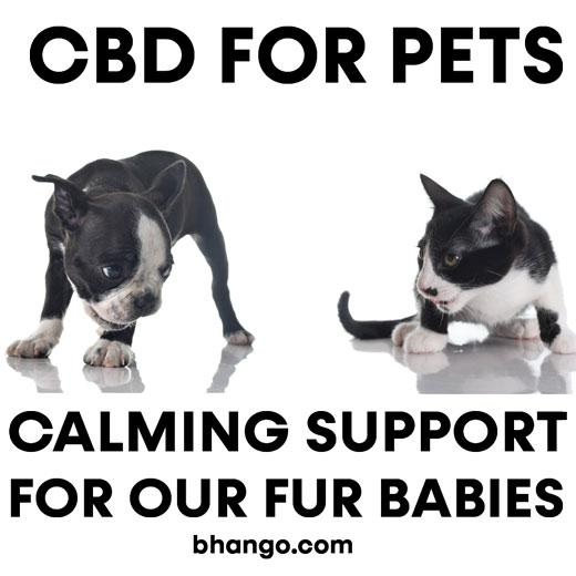 CBD For Pets. Calming support for your favorite furry friends